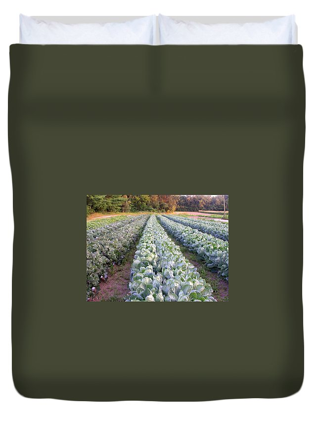 Cabbage Rows Duvet Cover featuring the photograph Row Three by Cynthia Wallentine