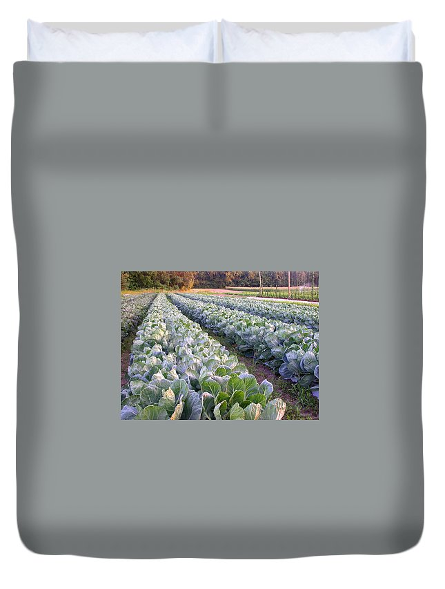 Cabbage Rows Duvet Cover featuring the photograph Row Two by Cynthia Wallentine