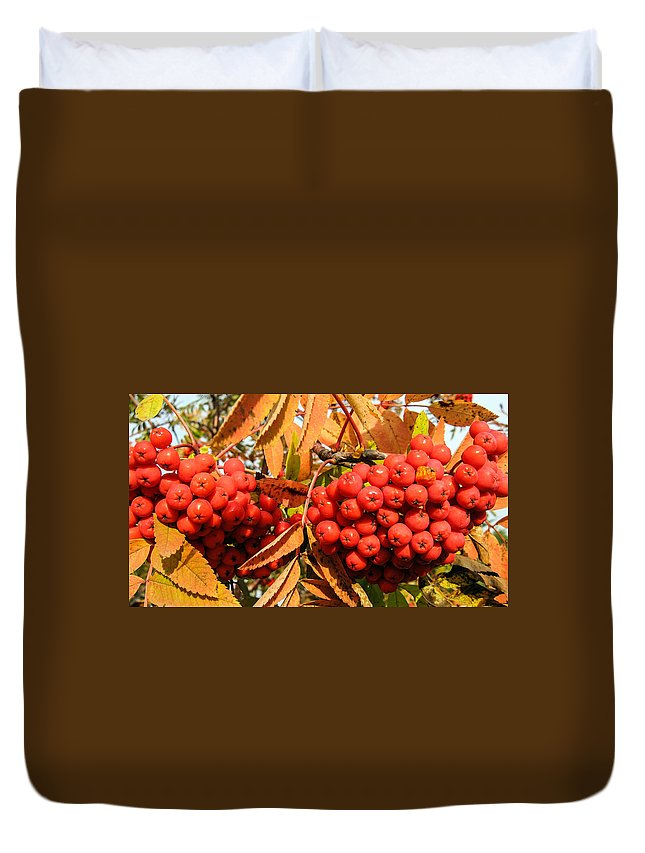 Rowan Berry Duvet Cover featuring the photograph Rowan Berry by Zina Stromberg