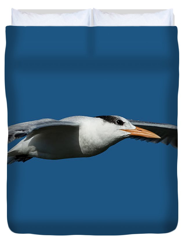 Royal Tern Duvet Cover featuring the photograph Royal Tern Flying Over Sanibel Island by Meg Rousher