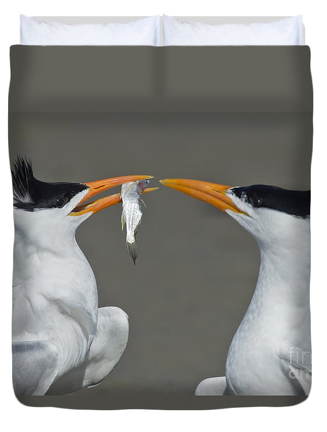 Royal Tern Duvet Cover featuring the photograph Royal Terns by Anthony Mercieca