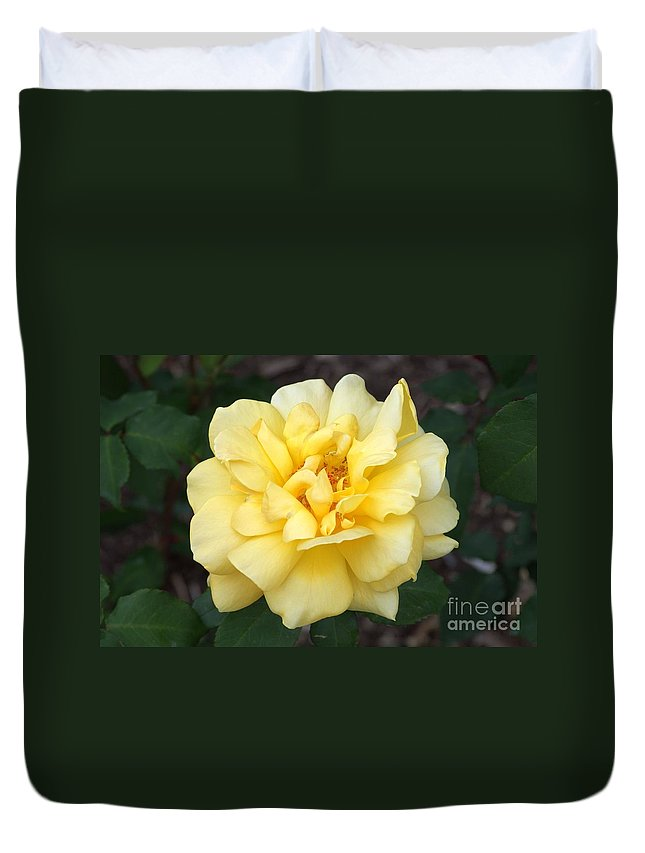 Yellow Duvet Cover featuring the photograph Royal Yellow Delight Rose... by Rob Luzier