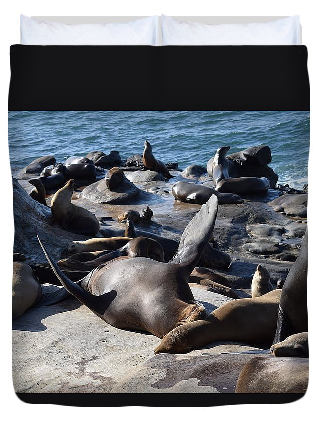 Sea Lion Duvet Cover featuring the photograph Rub My Belly by Steve Scheunemann