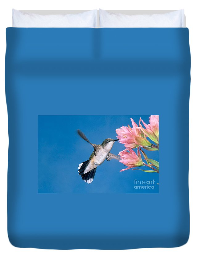 Fauna Duvet Cover featuring the photograph Ruby-throated Hummingbird by Anthony Mercieca