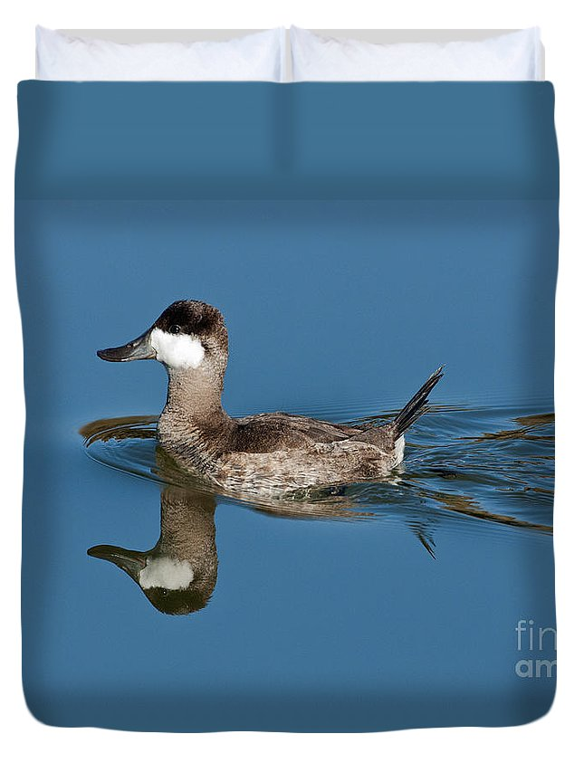 Fauna Duvet Cover featuring the photograph Ruddy Duck Drake by Anthony Mercieca