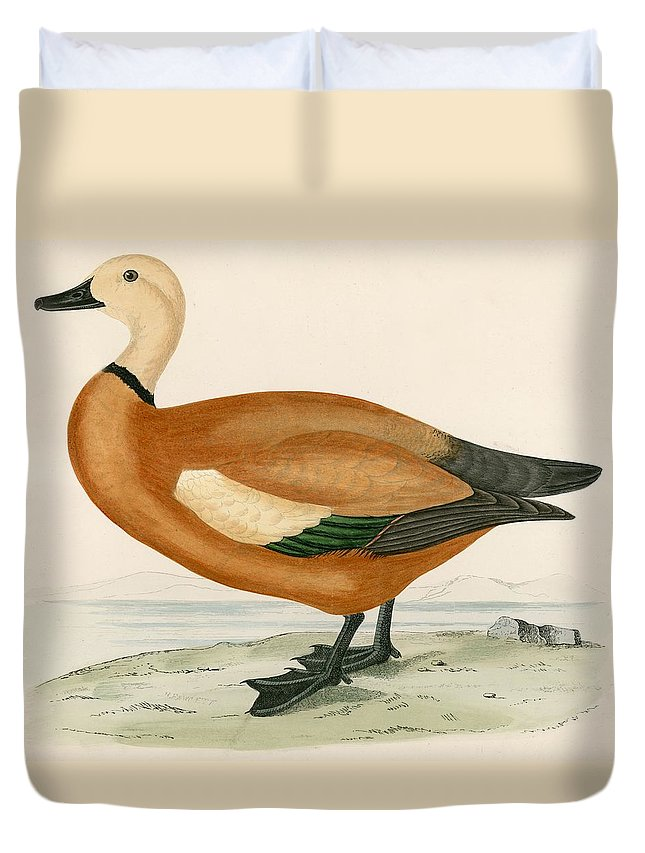 Birds Duvet Cover featuring the painting Ruddy Sheldrake by Beverley R Morris