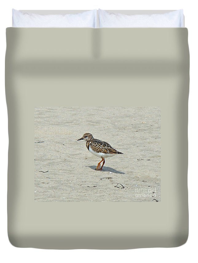 ruddy Turnstone Duvet Cover featuring the photograph Ruddy Turnstone Wading Bird - Arenaria Interpres by Mother Nature