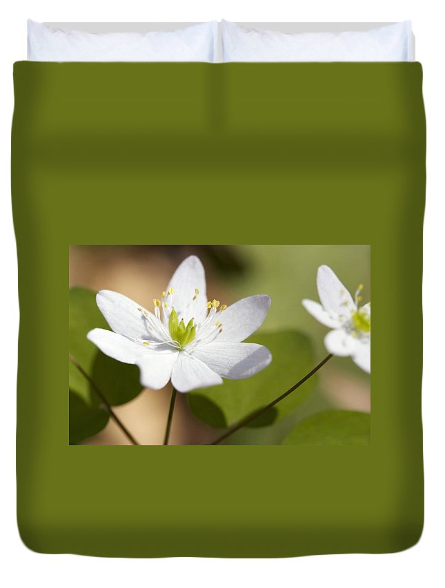 Rue Anemone Duvet Cover featuring the photograph Rue Anemone by Melinda Fawver