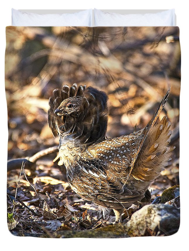 Ruffed Grouse Duvet Cover featuring the photograph Ruffed Grouse Ruff by Timothy Flanigan