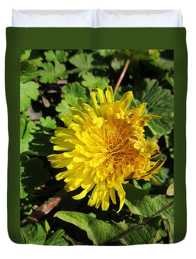 Dandelion Duvet Cover featuring the photograph Ruffled Dandelion by Rosita Larsson