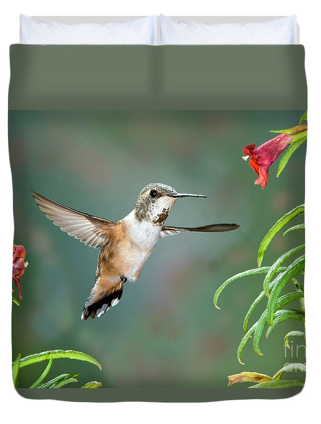 Animal Duvet Cover featuring the photograph Rufous Hummingbird Female At Monkey by Anthony Mercieca