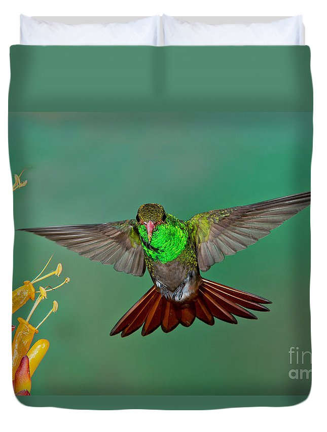 Rufous-tailed Hummingbird Duvet Cover featuring the photograph Rufous-tailed Hummer by Anthony Mercieca