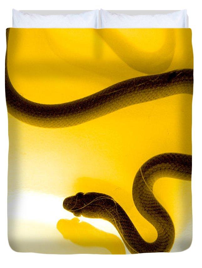 Reptile Duvet Covers