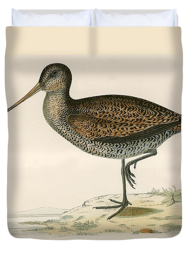Birds Duvet Cover featuring the photograph Sabines Snipe by Beverley R. Morris