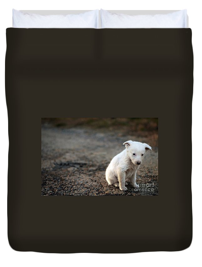 Stray Duvet Cover featuring the photograph Sad Dog by Cristian M Vela