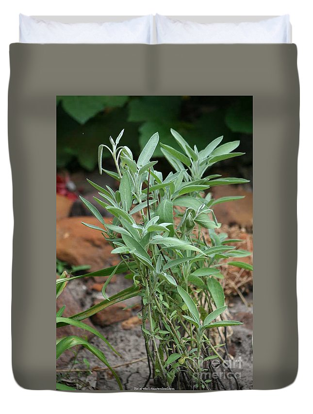 Salvia Officinalis Duvet Cover featuring the photograph Salvia Officinalis Sage by PainterArtist FIN