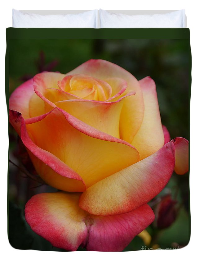Yellow Rose Duvet Cover featuring the photograph San Francisco Rose Garden Rose by Christiane Schulze Art And Photography