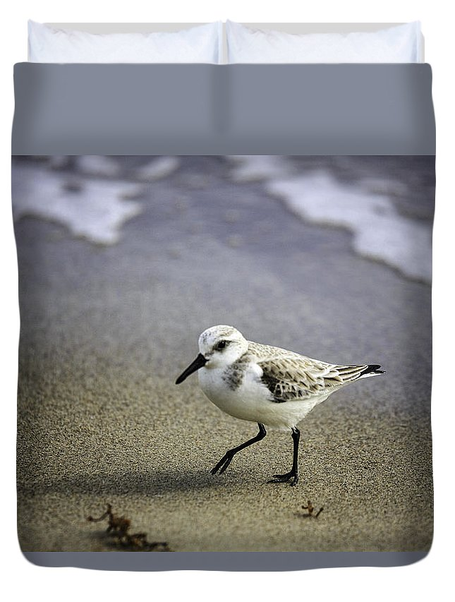 Birds Duvet Cover featuring the photograph Sanderling On The Shore by Fran Gallogly