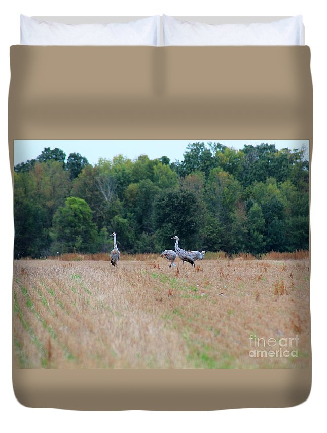 Sandhill Crane Duvet Cover featuring the photograph Sandhill Crane 2 by Stephanie Kripa