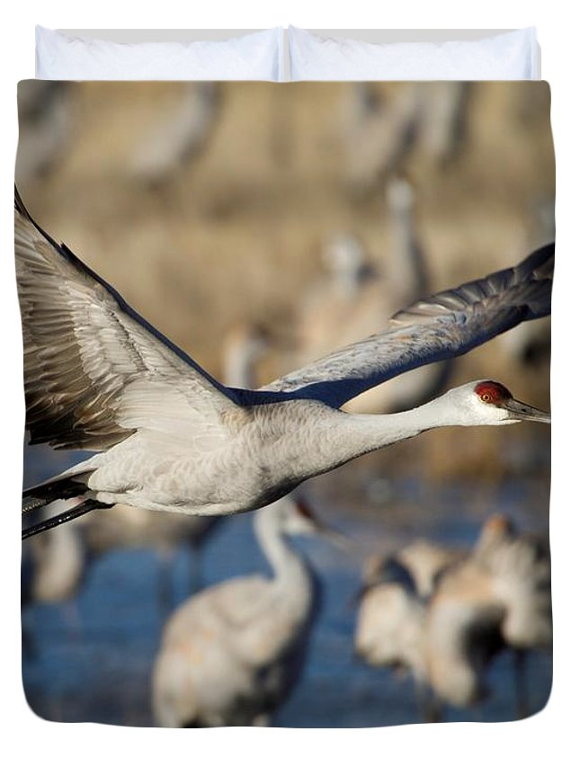 Animal Duvet Cover featuring the photograph Sandhill Crane Lift Off by Sabrina L Ryan