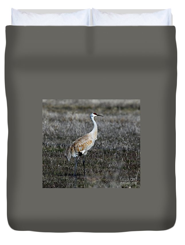 Sandhill Crane Duvet Cover featuring the photograph Sandhill Crane by Marty Fancy