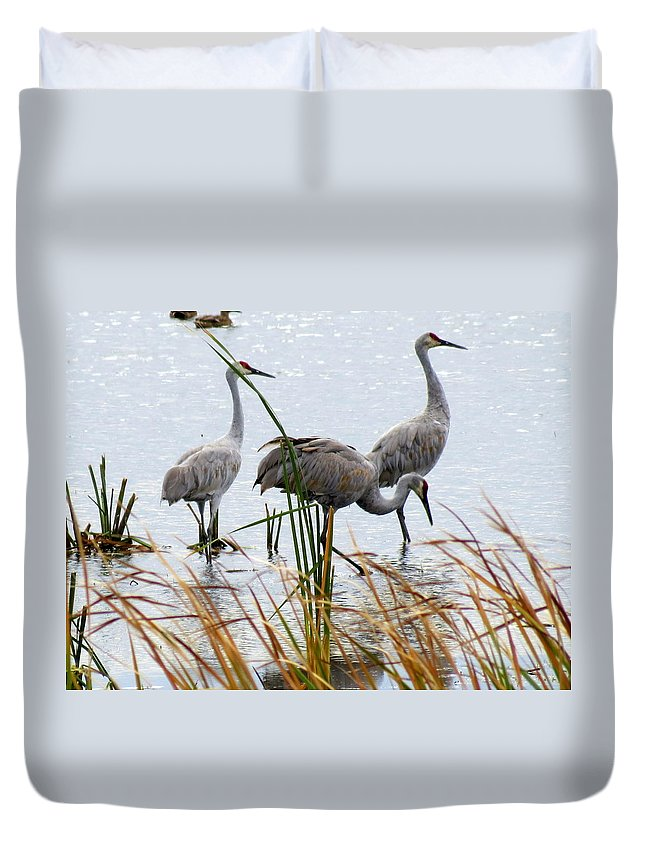 Nature Duvet Cover featuring the photograph Sandhill Cranes by Kay Novy