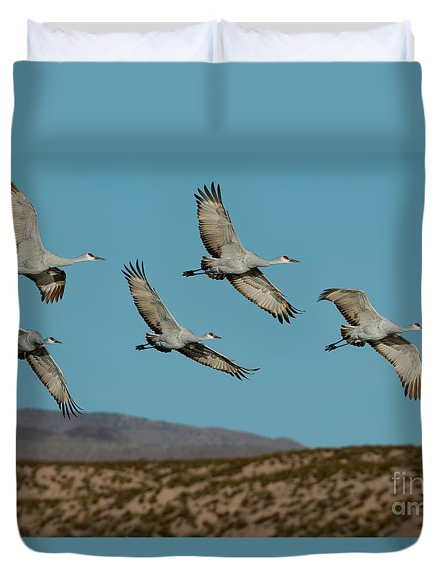 Sandhill Crane Duvet Cover featuring the photograph Sandhill Cranes Over Chupadera Mountains by Anthony Mercieca