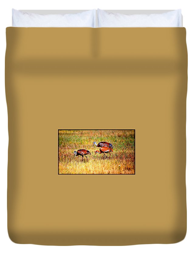 Bird Duvet Cover featuring the photograph Sandhill Family by Kathy Sampson