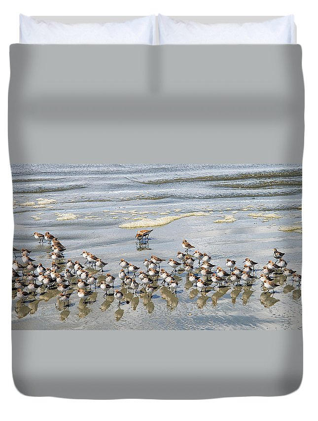 Tofino Duvet Cover featuring the photograph Sandpiper Reflections by Allan Van Gasbeck