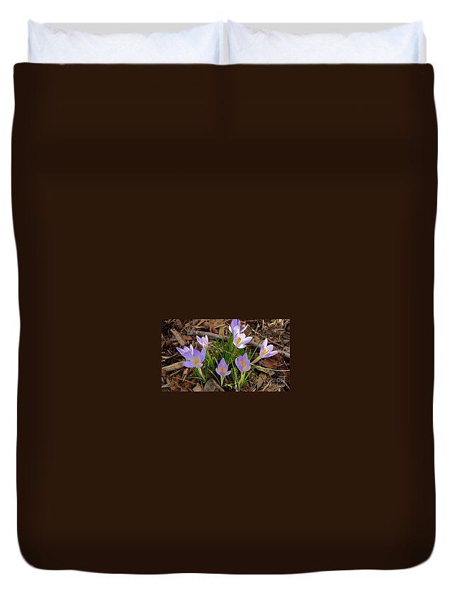 Lavender Flower Duvet Cover featuring the photograph Sanford by Joseph Yarbrough