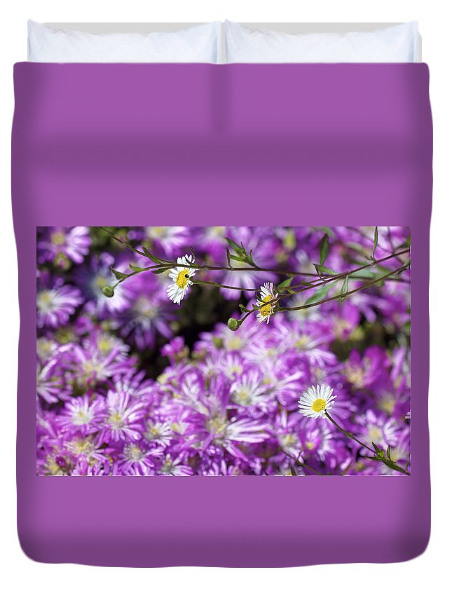 Barbara Duvet Cover featuring the photograph Santa Barbara Daisies In Ice Plant by SC Heffner