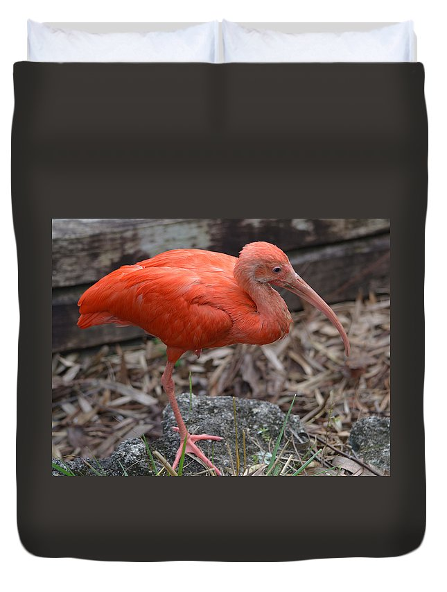 Ibis Duvet Cover featuring the photograph Scarlet Ibis One Legged Pose by Richard Bryce and Family
