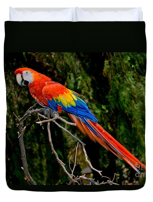 Bird Duvet Cover featuring the photograph Scarlet Macaw Perched by Anthony Mercieca