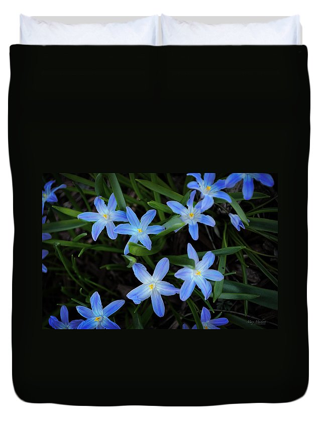 Scilla Flowers In The Morning Duvet Cover featuring the photograph Scilla Flowers In The Morning by Mary Machare