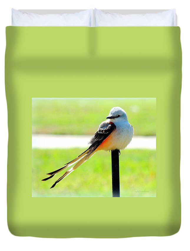 Animal. Bird Duvet Cover featuring the photograph Scissortail by Bob and Kathy Frank