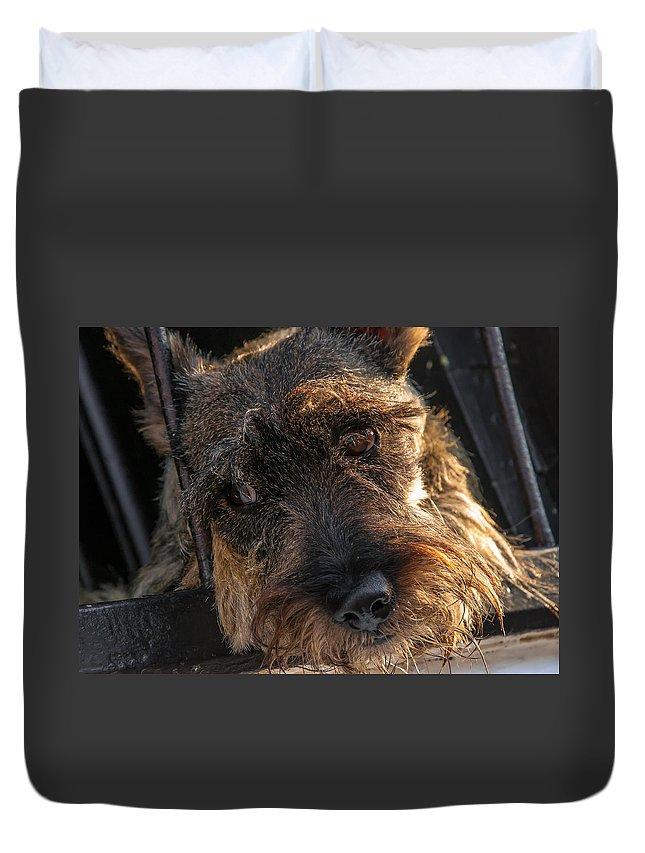 Scottish Duvet Cover featuring the photograph Scottish Terrier Closeup by Jess Kraft