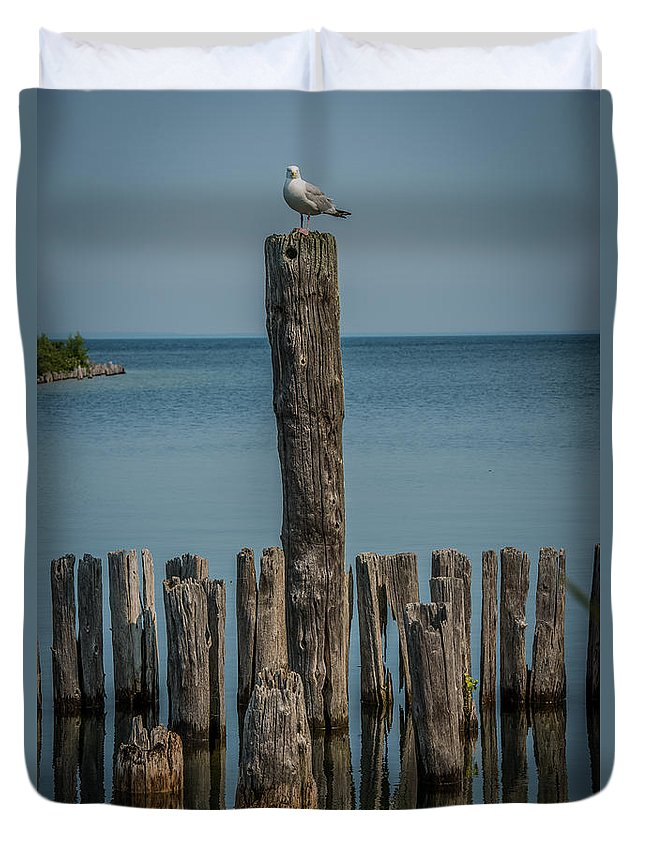 Dock Duvet Cover featuring the photograph Sea Gull On A Piling by Paul Freidlund