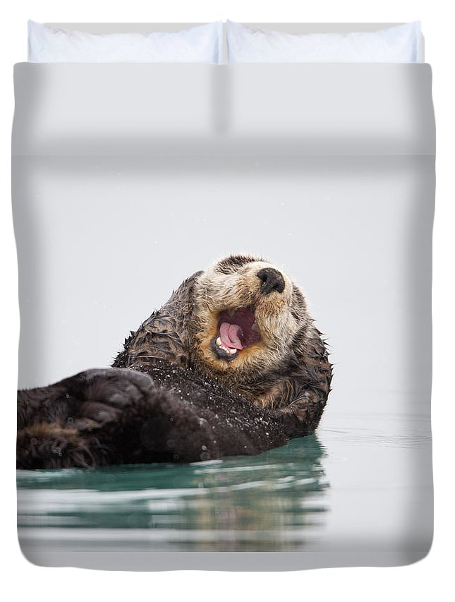 Humorous Duvet Cover featuring the photograph Sea Otter Scratching Head And Yawning by Milo Burcham
