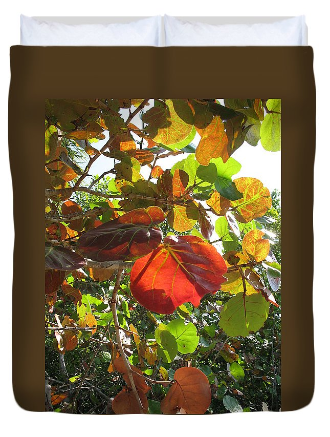 Seagrape Duvet Cover featuring the photograph Seagrape Leaves by Christiane Schulze Art And Photography