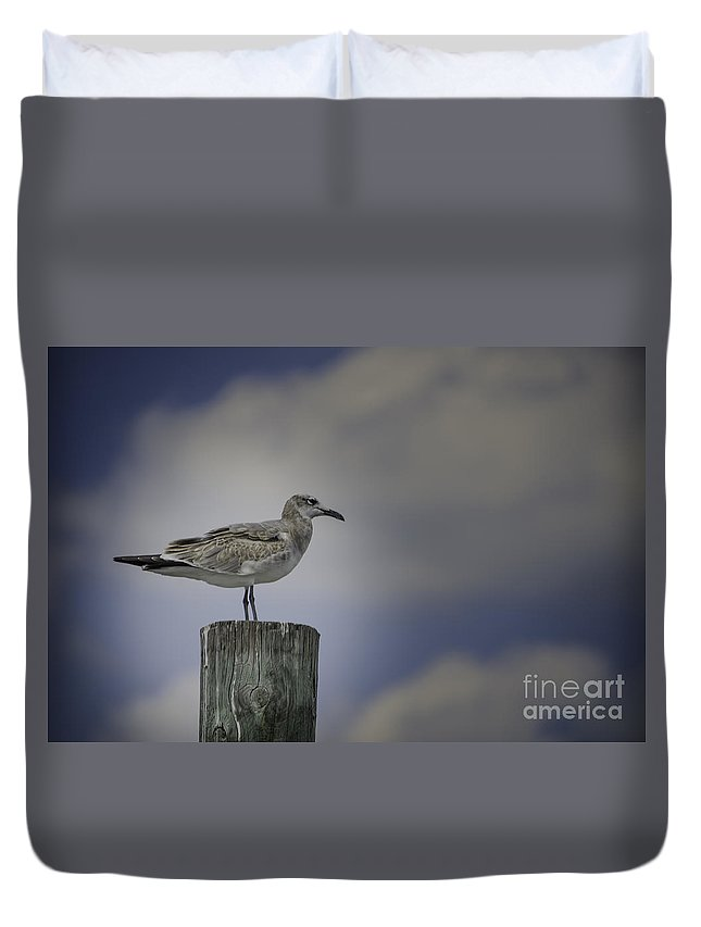 Bird Duvet Cover featuring the photograph Seagull by Dale Powell