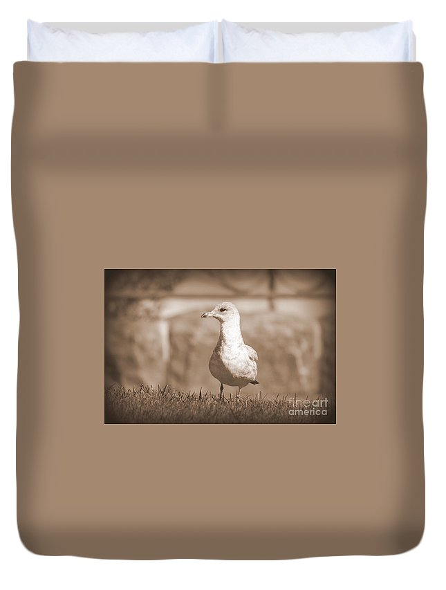 Seagulls Duvet Cover featuring the photograph Seagull In Sephia by Jennifer E Doll