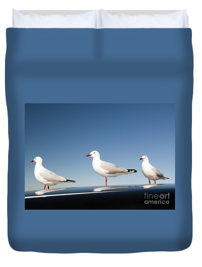 Australia Duvet Cover featuring the photograph Seagull by Tim Hester