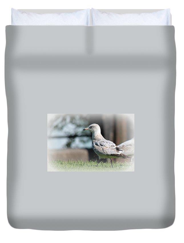 Seagulls Duvet Cover featuring the photograph Seagulls 1 by Jennifer E Doll