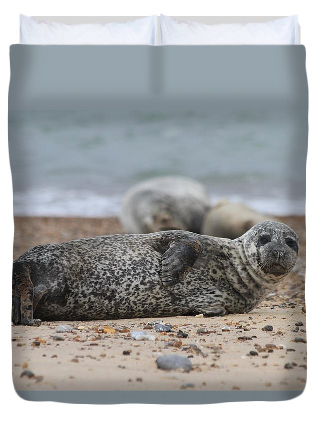 Seal Duvet Cover featuring the photograph Seal Pup On Beach by Gordon Auld