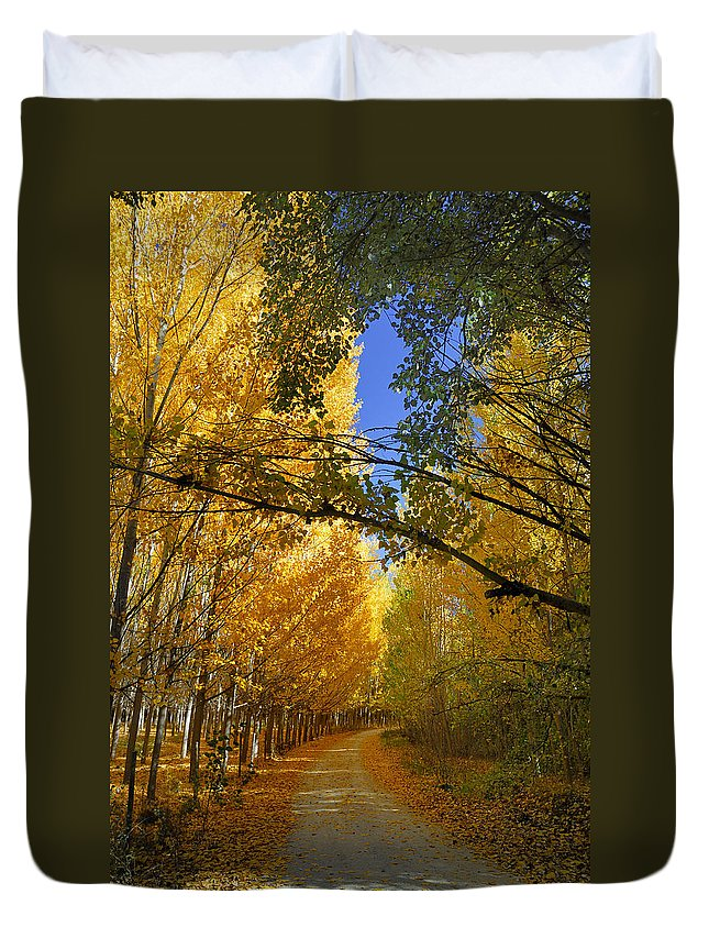 Landscapes Duvet Cover featuring the photograph Autumn Secrets by Guido Montanes Castillo