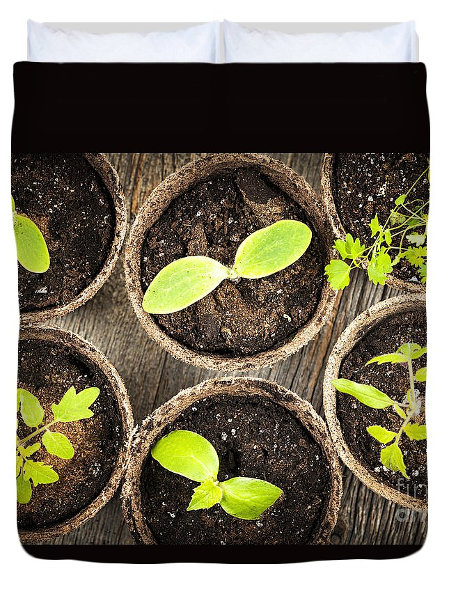 Seedlings Duvet Cover featuring the photograph Seedlings Growing In Peat Moss Pots by Elena Elisseeva
