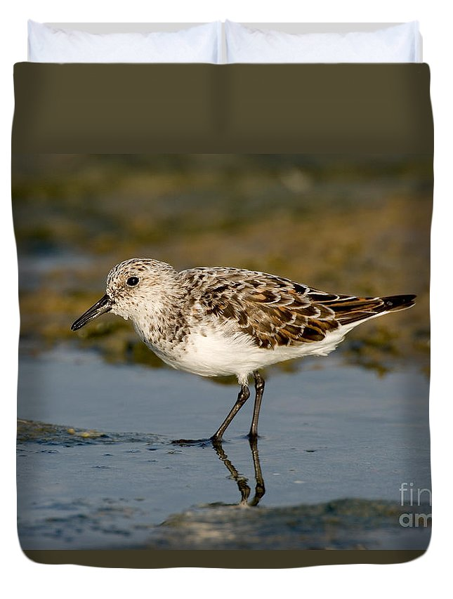 Animal Duvet Cover featuring the photograph Semipalmated Sandpiper Calidris Pusilla by Anthony Mercieca