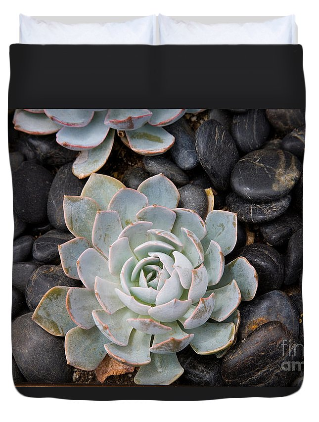Pebble Duvet Cover featuring the photograph Sempervivum by Diane Macdonald
