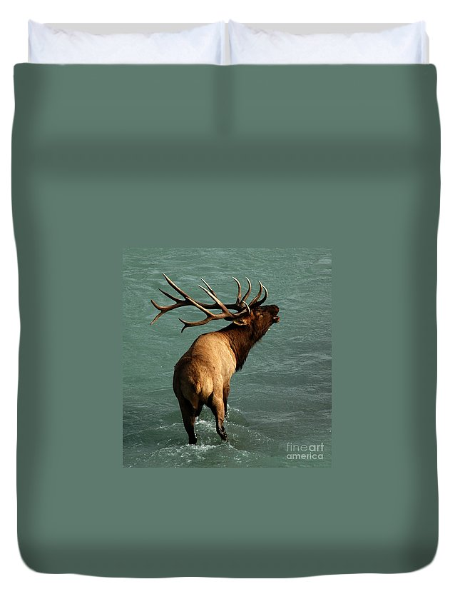 Elk Duvet Cover featuring the photograph Sending A Challenge by Vivian Christopher