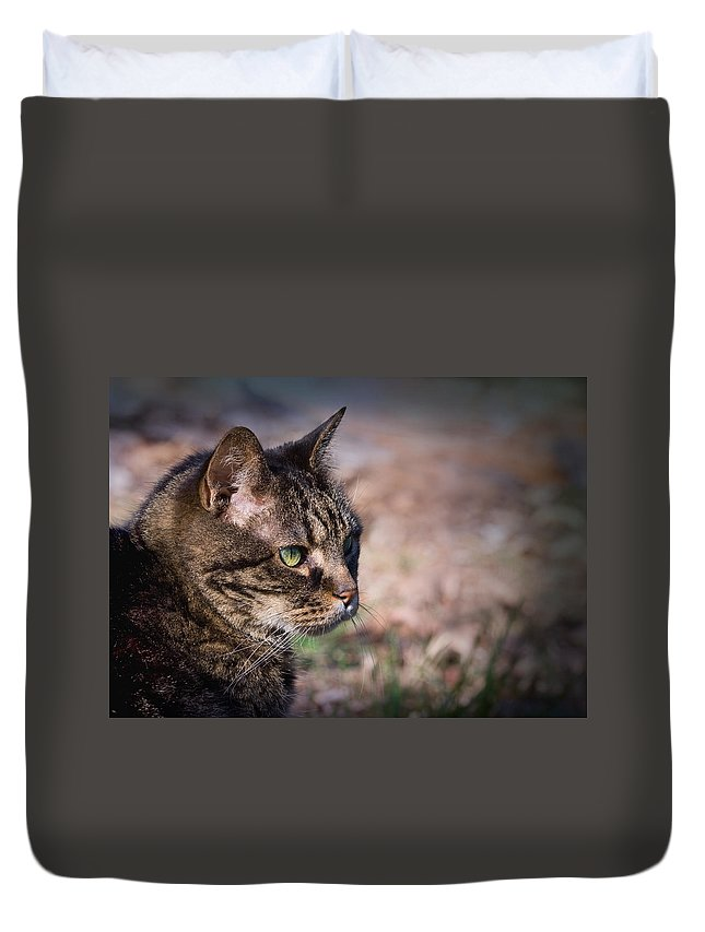 Mature Duvet Cover featuring the photograph Senior Cat by Melinda Fawver